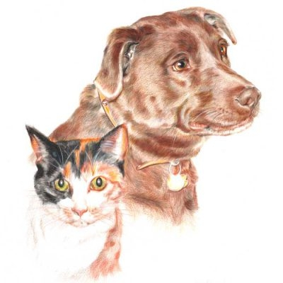 Coloured pencil drawing_Dog and cat