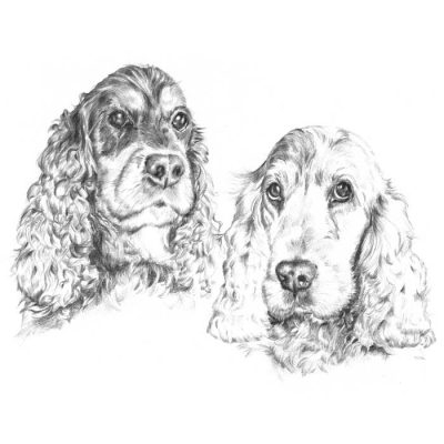 Graphite drawing_Two cockers