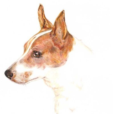 Coloured pencil drawing_Jack Russell