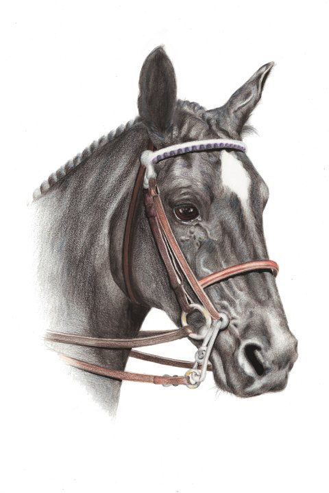 Coloured pencil drawing_Horse