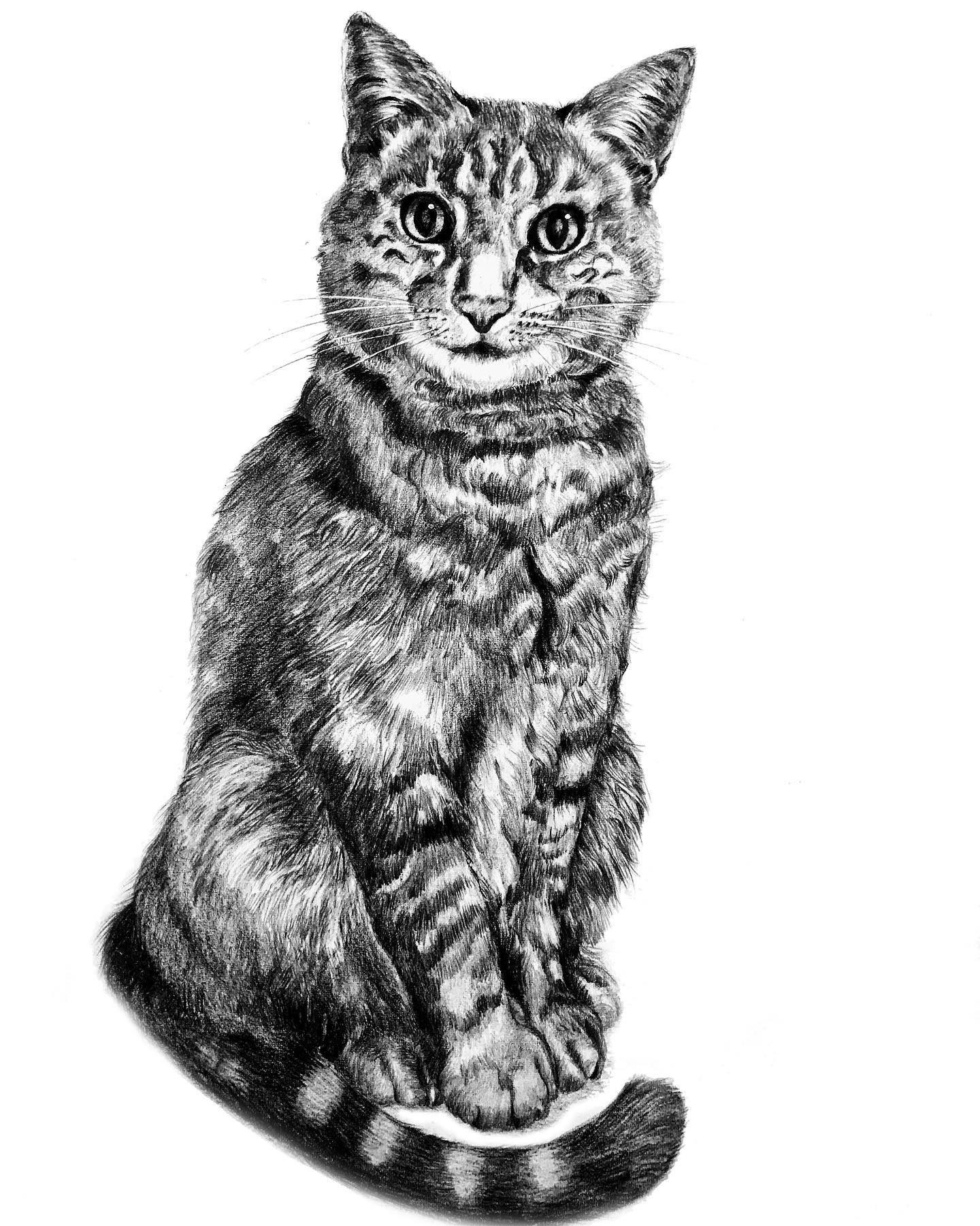 Pencil drawing_Tabby cat